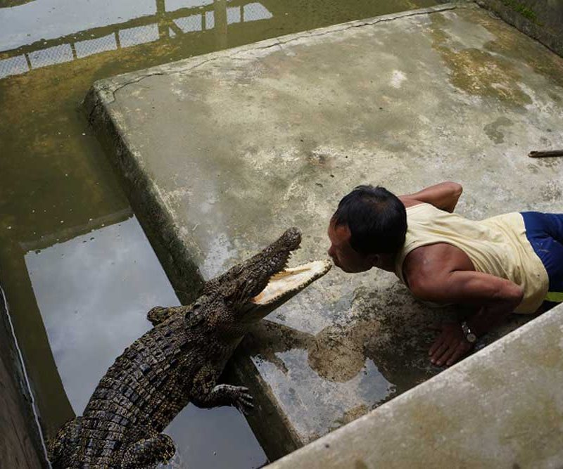 Thaketa Crocodile Farm